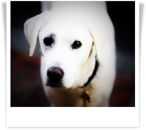 white-dog-polaroid