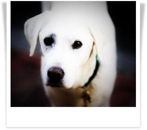 white-dog-polaroid