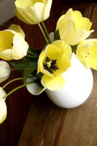 yellow-pitcher-flowers